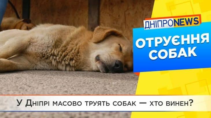 У Дніпрі масово труять собак
